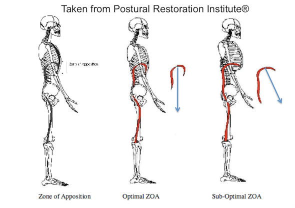 guest post  rib cage position  breathing and your pelvic