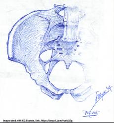Pelvis image